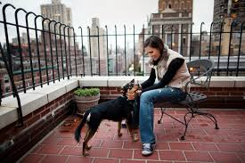 odds slim for finding dog lost in manhattan the new york times