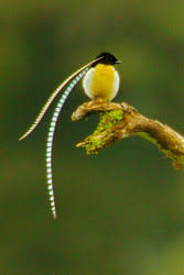 Paradise Of The Blind Pdf Lecture And New Book Chronicle Epic Quest For Birds Of Paradise