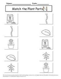 ideas about plant worksheets for preschool bridal catalog