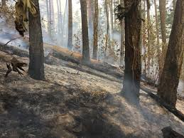 Wild Fires In Oregon State by Odf Southwest