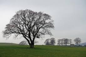 trees in winter photographs tejvan