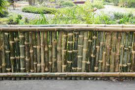 bamboo land nursery and parklands making living bamboo fence home decor xshare us