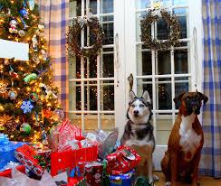 boxer dog xmas boxer dog christmas decorations u2013 decoration image idea