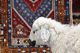 Caring For Wool Rugs Care U0026 Cleaning Of Your Handmade Rug The Kilim Diaries