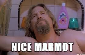 The Dude Meme - the dude likes your marmot meme on imgur