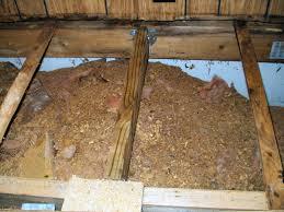 sub flooring repair flooring designs