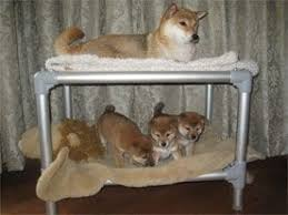 Bunk Bed For Dogs The 25 Best Dog Bunk Beds Ideas On Pinterest Cat Bunk Beds