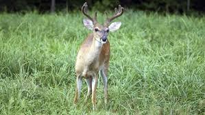deere gt235 sale 20 deals from 3 99 sheknows best deals