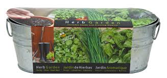 windows indoor windowsill herb garden decor how to plant a kitchen