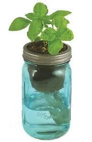 self watering indoor planters herb garden kit self watering indoor planter with organic basil