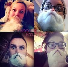 Cat Beard Meme - cat bearding is the latest greatest meme teddyhilton com