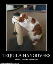 Funny Tequila Memes - tequila hangovers tequila of the month