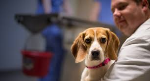 state with most dog owners 2016 nc state veterinary hospital home nc state veterinary medicine