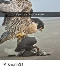 Funny Bird Memes - if you re a bird i m a bird kreativ31 funny meme on me me