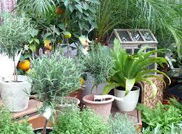 topfpflanzen balkon topf und kübelpflanzen für balkon und terrasse gärtnerei