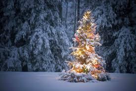 real tree with snow temasistemi net
