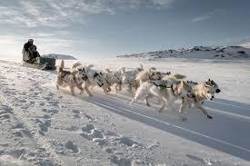 after the dog sled u2013 greenland hut life