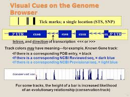 Dark Blue Meaning by Ucsc Genome Browser 1 The Progress 2 Database And Tool Explosion