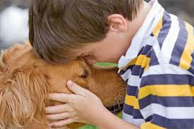 How To Get A Comfort Dog Pet Care Tips Pet Care Questions U0026 Advice For Pet Lovers Times