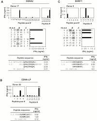 early t cell recognition of b cells following epstein barr virus