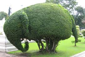 Laurel Topiary - a word a day topiary