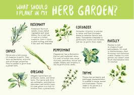 plants that don t need sunlight to grow herbs are some of the easiest plants to grow since they need