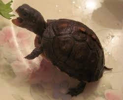 944 best turtle and fish plus tanks images on