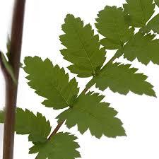 tree saplings for sale buy saplings from tree2mydoor