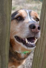 doggie dental care