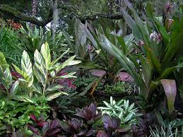 Tropical Plants Gardens Beautiful Indoor Plant Containers Types Of Gardens And Garden Easy