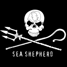 Picture Of A Pirate Flag Sea Shepherd Conservation Society Youtube