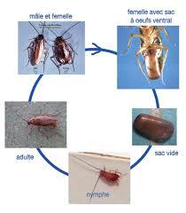 fly desserte roulante dispositif les cafards guide bâtiment durable