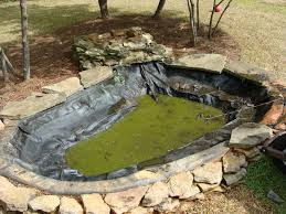 backyard ponds roselawnlutheran