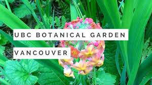 Botanical Gardens Ubc by Ubc Botanical Garden U2013 Vancouver B C Youtube