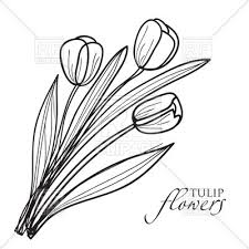 bouquet of tulips in sketch style vector clipart image 21187