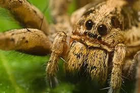 367 best spiders x images on pinterest spider webs insects and