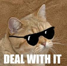 Working Cat Meme - cybergata starecat a k a graficscat working its way to becoming