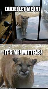 Funny Animals Meme - pin by kenzie dolack on animals pinterest animal memes and cat