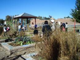 Urban Garden Denver - urban agriculture cultivating sustainability