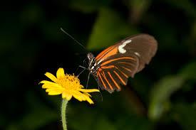 butterfly pavilion denver
