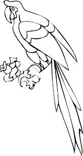 parrots coloring pages parrot coloring pages parrot parrotcoloringpages