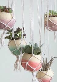 best 25 hanging succulents ideas on pinterest succulent wall