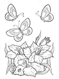 butterfly coloring pages download and print butterfly coloring pages