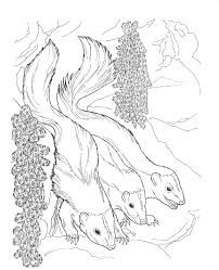 skunk coloring pages getcoloringpages com