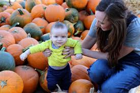 pumpkin patch maternity pumpkin patch baby aol image search results