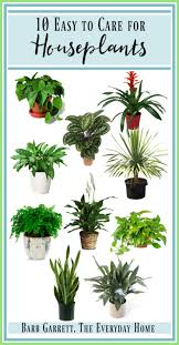 10 easy to maintain houseplants the everyday home
