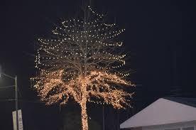 half lit in fairhope the trees or the leadership kerry flowers