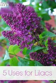 118 best gardening images on pinterest flowers gardens and plants