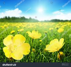 Image Of Spring Flowers by Field Spring Flowers Perfect Sunny Day Stock Photo 95668978