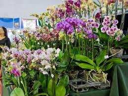 Orchid Plant How To Grow Orchids For Profit 5 Steps With Pictures Wikihow